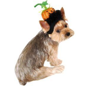 Pumpkin Head Dog Headpiece