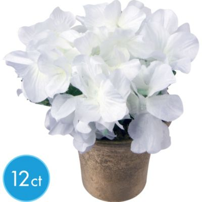 Cream Hydrangeas in Pots 12ct