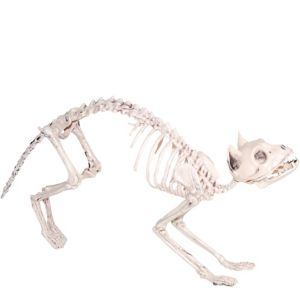 Skeleton Cat