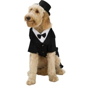 Dapper Dog Dog Costume