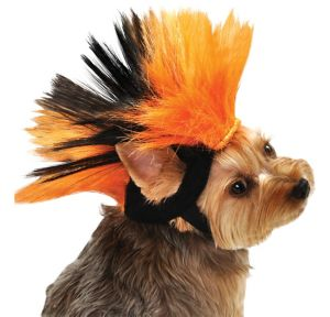 Black and Orange Dog Mohawk