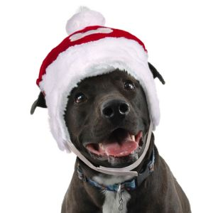 Plush Dog Santa Hat