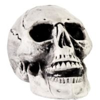quick shop cracked skull - Halloween Skulls Pictures