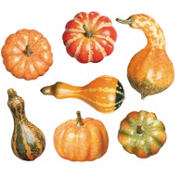 Pumpkins and Gourds 7ct