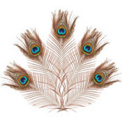 Bag of Peacock Feathers 5ct