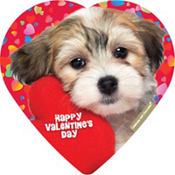 Cute Puppy Heart Box of Chocolates 4pc