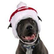 Red Dog Santa Hat