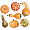 Pumpkin and Gourd Box 7ct