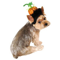 Pumpkin Head Dog Headpiece