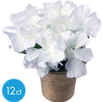 Cream Hydrangeas in Pots 12ct