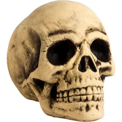 Hand detailed skull