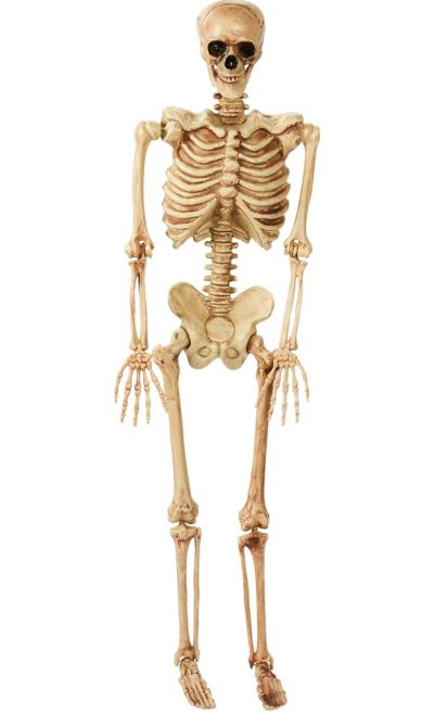 Life Size Poseable Skeleton 2ft X 5ft Party City Canada