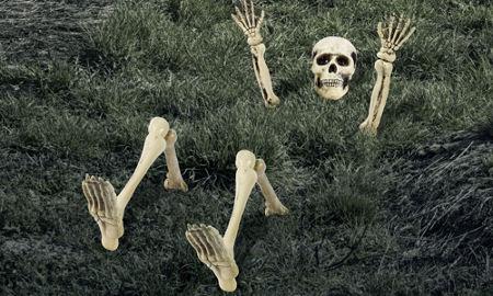 Halloween Skeletons & Skeleton Decorations - Halloween Skulls ...